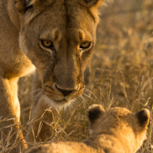 Mother of Cub